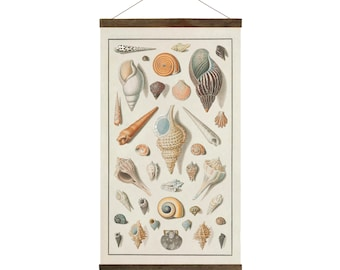 Vintage Seashells, drawings from 1800's, Free Shipping