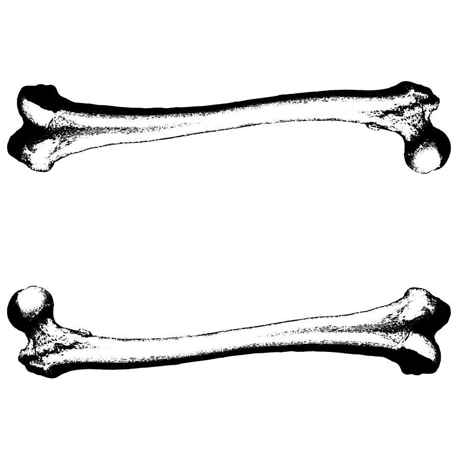 Vintage Victorian Medical Femur Bone Engraving Vectors Etsy