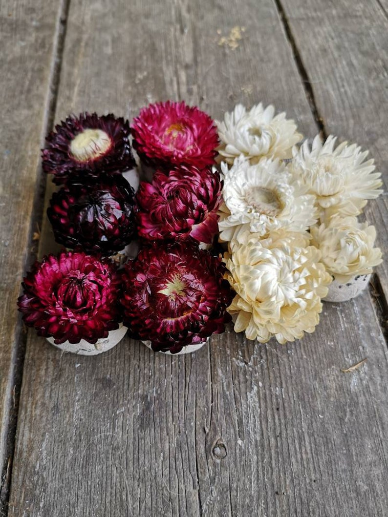strawflower wedding favor baby shower White-burgundy mix dried flower on top 25 Save the bees Seed Bombs seed favour wildflower seed