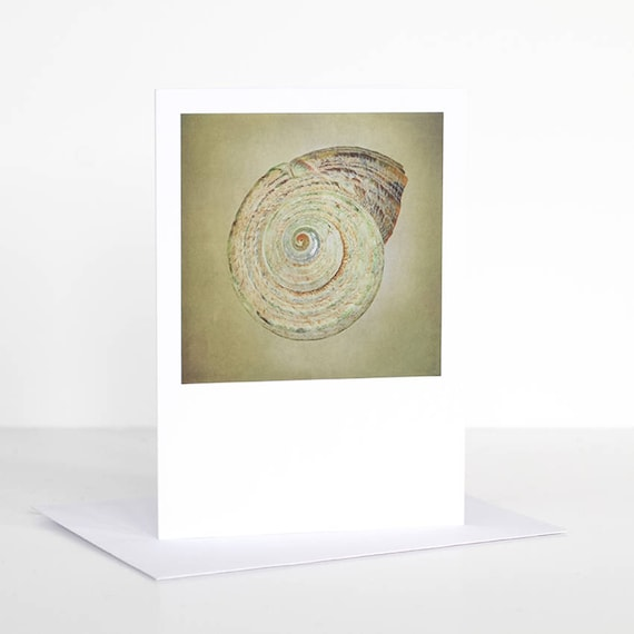 photo greeting card photographic greeting card shell etsy. Black Bedroom Furniture Sets. Home Design Ideas