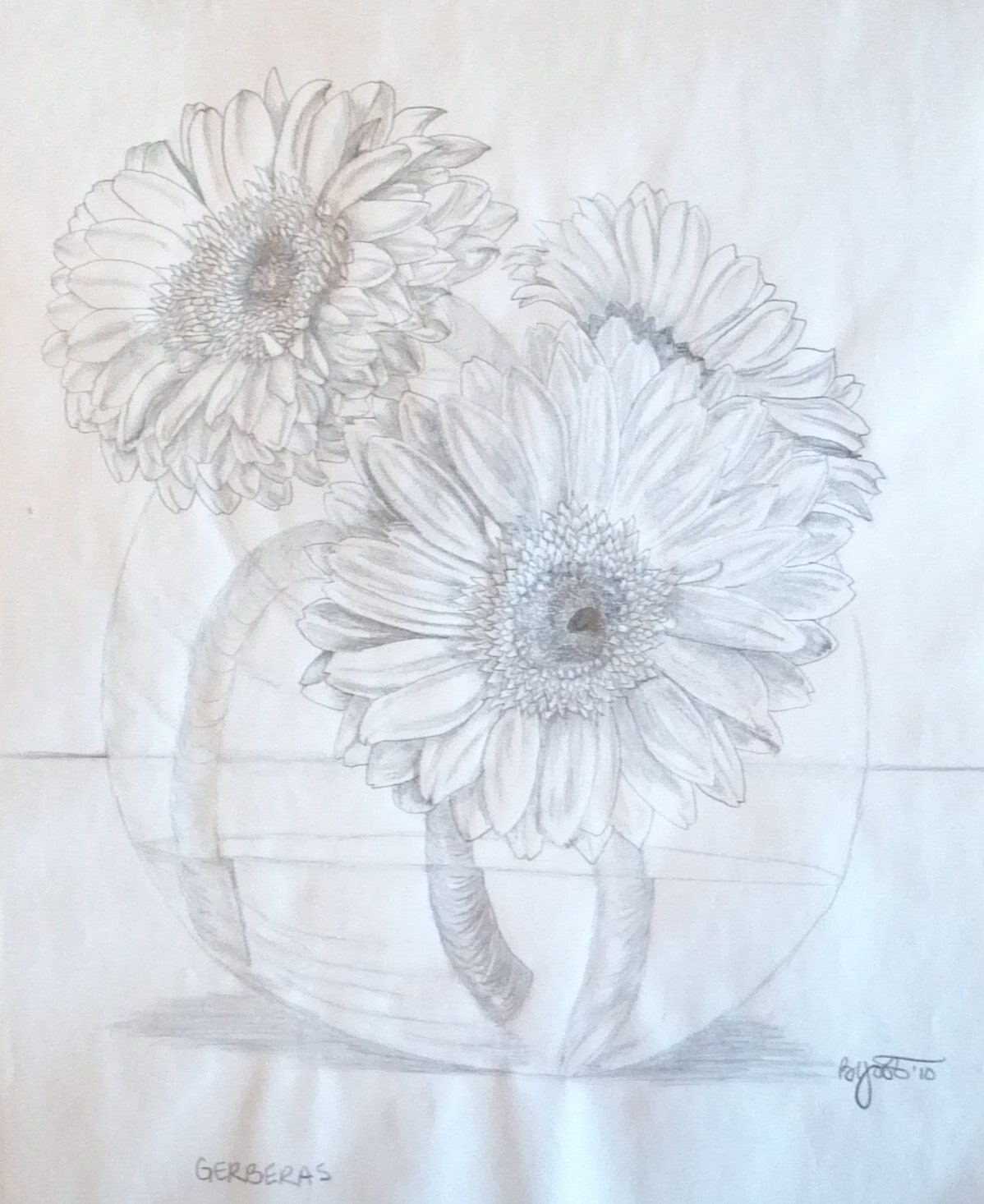 Fresh gerbera daisies pencil drawing