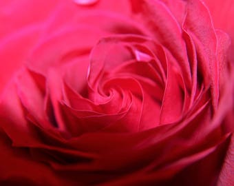 Close Up Red Rose Photography Print, Available in 5x7, 8x10, or 11x14 inches