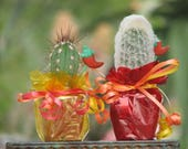 10 Decorated Cactus Mexican Fiesta in 2 inch pots
