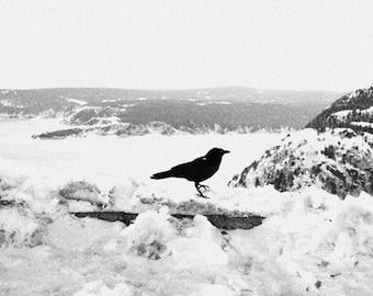 Crow Art Prints, Black And White Photography, Winter Art, St. John's Print