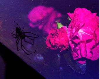 Spider Art, Surreal Rose Photography, Modern Gothic Art, Fine Art Print