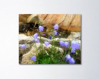 Bluebell Art, Floral Canvas, Nature Wall Decor, Flower Canvas, Fine Art Photography On Canvas, Fine Art Canvas, Purple Flowers, Fogo Island