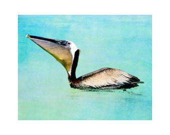 Pelican art, Florida art, pelican photography, beach house art, pelican feeding, bird art, Siesta Key art, turquoise art Florida photography