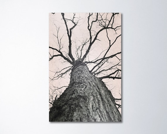 neutral wall art canvas schlabach framed image large tree art canvas wall vertical photography neutral etsy
