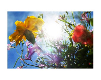 Colorful Floral Art, Spring Photography, Nature Art Print, Spring Art, Large Wall Art Photography, Spring Flowers, Dreamy, Ethereal Sunshine
