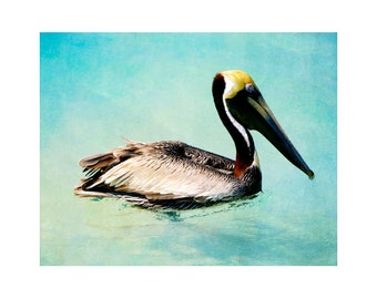 Pelican photography, Florida photography, pelican art, ocean art, beach art print, beach wall art, Siesta Key, Sarasota, Florida art prints