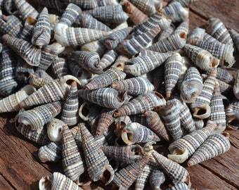 """PHILIPPINE MIX OF TINY SEA SHELLS 1//3 Cup 300 5//8/"""" /& Under"""