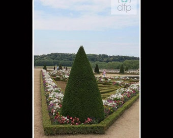 Versailles Garden Photography Print, 8x10 matted to 11x14, or 5x7 matted to 8x10, Home Décor, Wall Art
