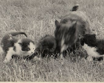 Vintage Snapshot Photo Mama Cat with Kittens Blurry Face Movement 1940's, Original Found Photo, Vernacular Photography