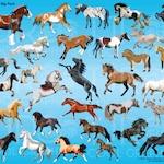 Horses - Big Pack Clip Art  Digital Realistic Clip Art, Horses Clipart, PNG, Printable, Arabian, Clydesdale, Appaloosa