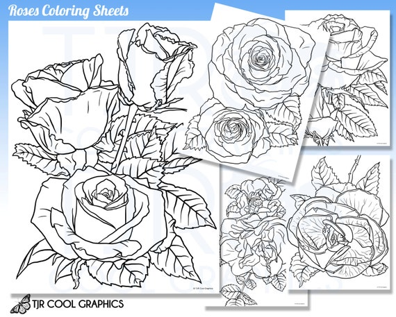 Rosas para colorear hojas adulto Digital realista JPG DIY | Etsy