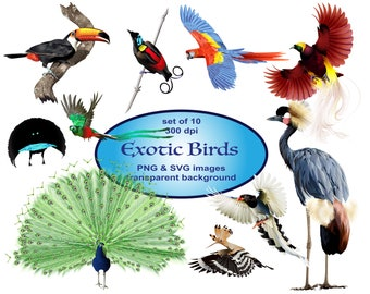 Exotic Birds Clipart, Animals Clipart, SVG Clipart, Peacock Clipart