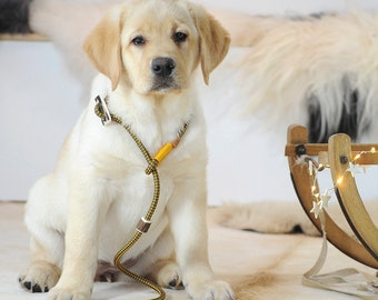 Dog Slip Lead / Moxon Lead in oliv-golden-yellow   strong adjustable Dog Leash made of rope with integrated Antler stop and collar   Ø8mm