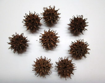 200 Sweet Gum Balls For Crafts Potpourri Decorating Without Stems