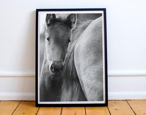 black /& white fine art print of a little foal Wild horses photography