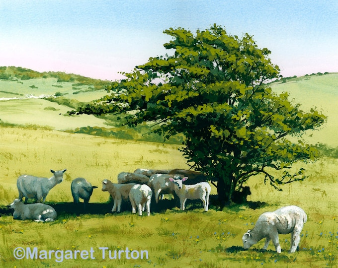Featured listing image: Hot Lamb on the South Downs, mounted print signed