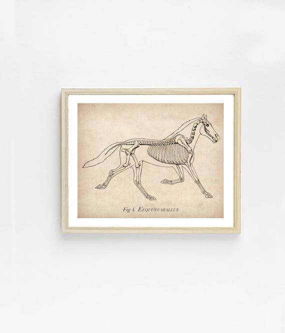 Pferd-Anatomie-Kunstdruck. Pferd-Illustration. | Etsy