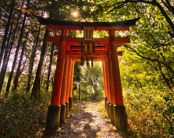 Two Sides - Kyoto - Japan - Sunrise - Landscape Photography - Nature - Tokyo - Shrine - Gate - Asia - Art - Path - Travel - Large Format