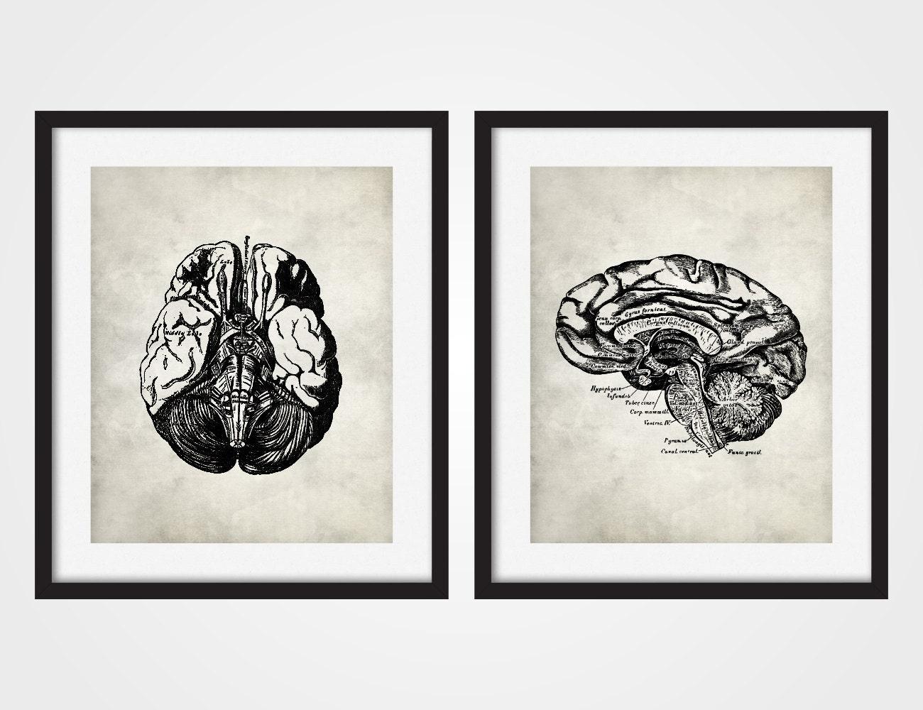Anatomy Art Print Human Brain Brain Art Human Anatomy Set | Etsy