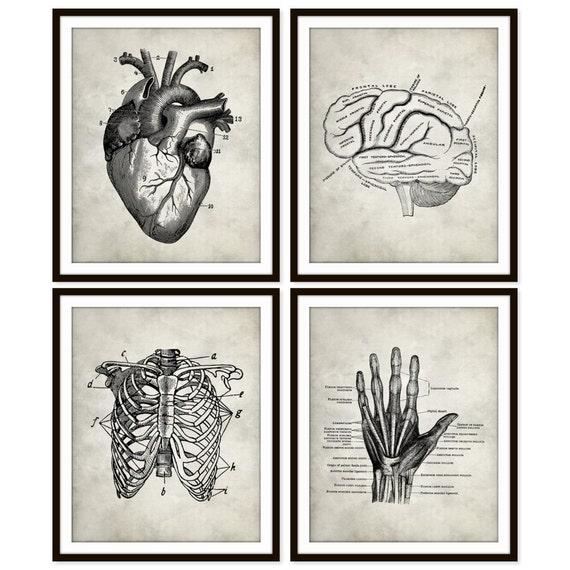 Vintage Heart Anatomy Art Print Rib Cage Brain Hand Etsy