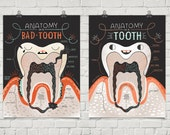 Anatomy of a Good Tooth and Bad Tooth: Two Art print Set