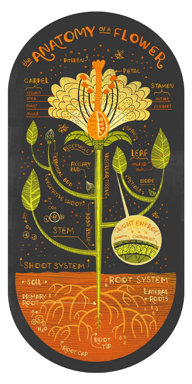 The Anatomy of a Flower art print image 0