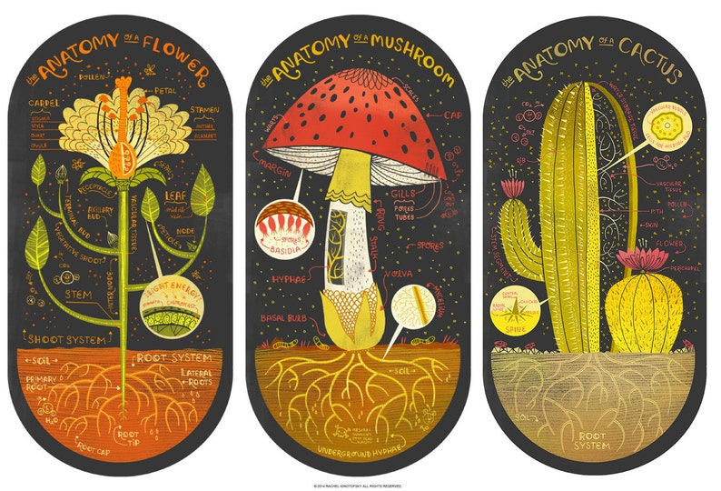 All three Plant Anatomy Art Prints DEAL image 0