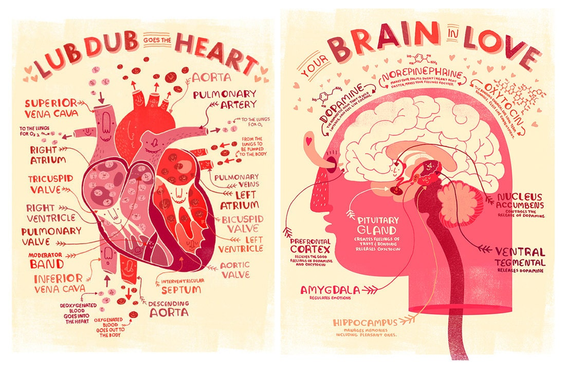 Valentine\'s Heart and Brain Anatomy Poster DEAL | Etsy