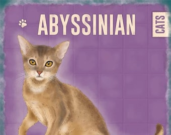 Abyssinian Cat Ireland