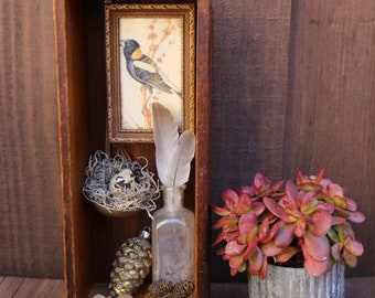 A Bird Watchers Box - A Found Object Assemblage Art Box