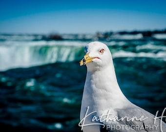 Niagara Seagull, Niagara Falls, Ontario, Canada Colour Photographic Art Print