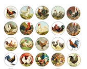 Chicken Hen Rooster Cabinet Drawer Knobs Pulls Farmhouse Country Rustic
