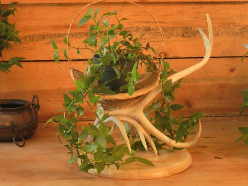 ANTLER Candelabra, Plant Holder,antler Table Centerpiece,rustic  Decor,antler Decor,plant Displays,antler Chandeliers