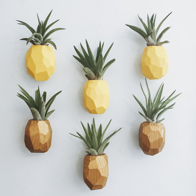 Pineapple Air Plant Magnet w/Air Plant image 0