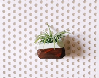 Mini Wood Geo Magnet w/Air Plant (Walnut Stain)