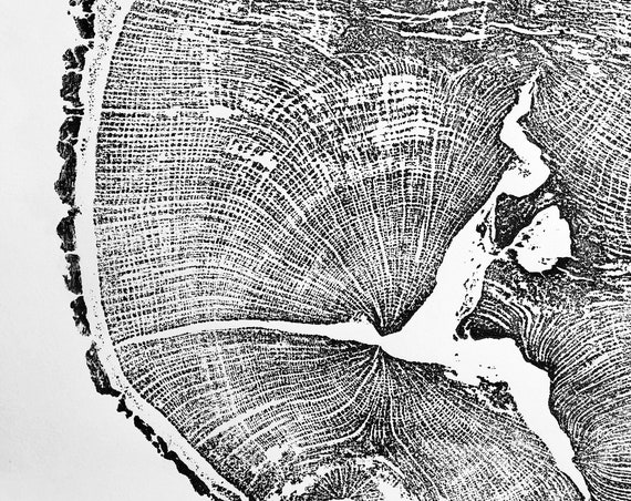 English Oak, Tree ring art print, Oak from Liverpool UK, Anniversary art, Tree ring art, Tree rings, Original Woodcut print by Erik Linton