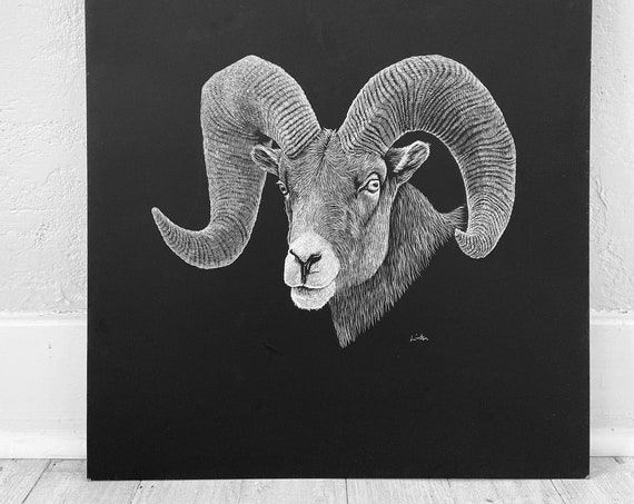 Bighorn Sheep art, Etching of a Big Horn, 18x24 inch giclee print, Ram art, Big Horn sheep print, Etching by Erik Linton