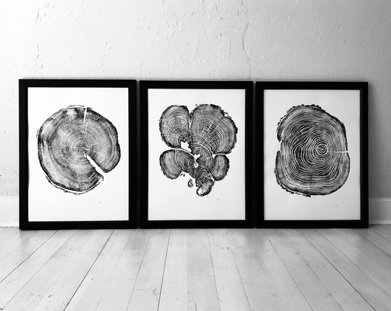 Set of 3 tree ring prints, Triptych wall art, Locust tree, Cedar tree, Pine tree, Christmas Tree ring art, First Anniversary paper gift