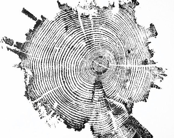 Yellowstone wall art, Real tree ring print, Yellowstone Park tree, Tree Ring Print, Tree wall Art, tree ring art print,  Dendrology art gift