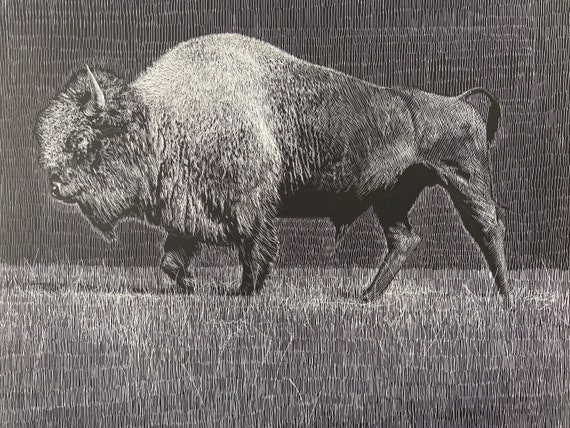 Etching of a Buffalo, 18x24 inch giclee print, Buffalo art, Yellowstone Bison, Bison art, Yellowstone bison art, Etching by Erik Linton