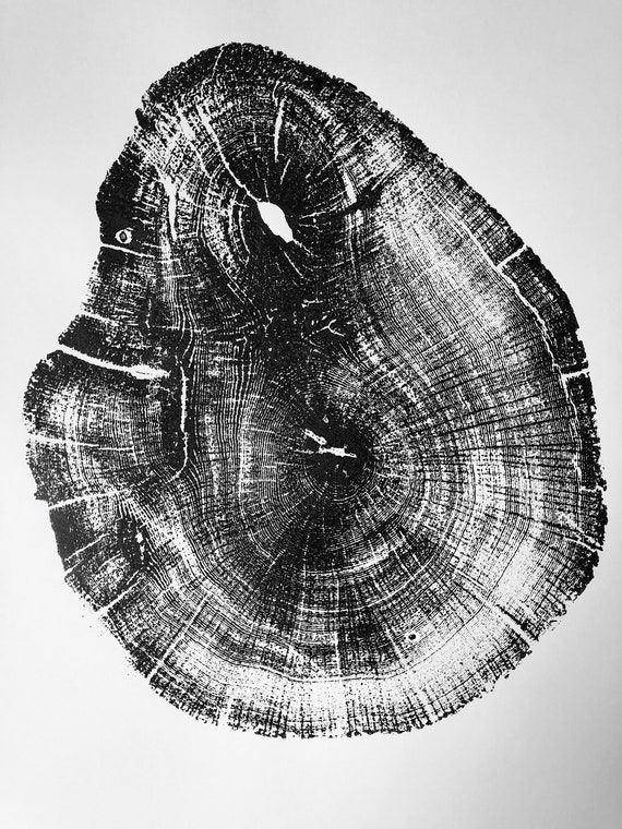 Michigan Oak, Lake Superior, Michigan Tree Ring Print, Tree ring art print, 5th anniversary, tree rounds, tree slices, Tree stump art, oak