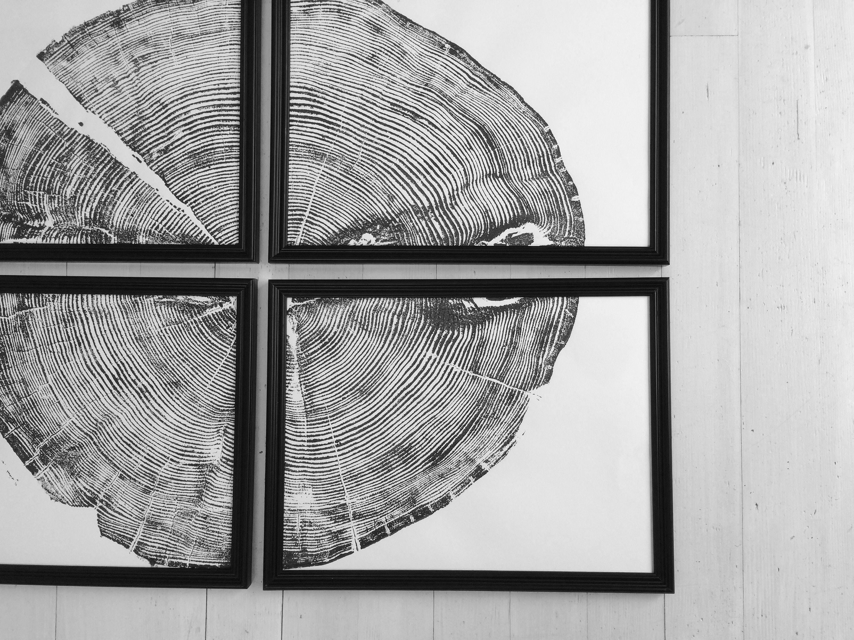 Set Of 4 Tree Ring Prints Sundance Canyon Large Prints Tree