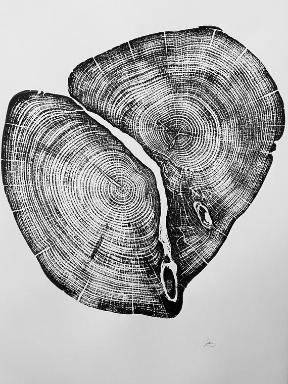 Waco Texas, Temple Texas, Cedar Tree ring print, Tree stump art, Original Woodcut print, Woodblock print, Linton Art