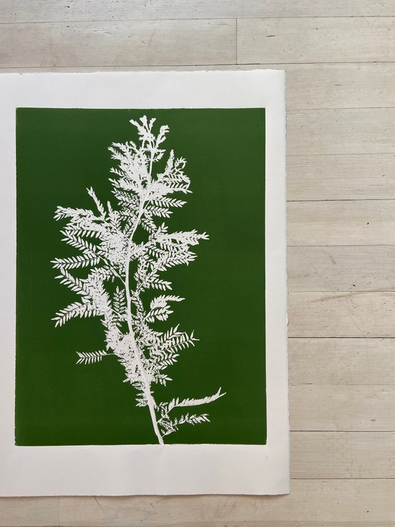 Green Locust Branch, hand pressed botanicals, From Real Plants, Green monoprint, giclee botanicals, Plant wall art, collage