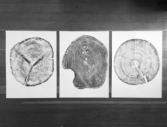 Set of 3 tree ring prints, Triptych Wall Art, Large Tree Rings, Pine tree rings, Cedar Tree rings, Mulberry Tree rings, Christmas art ideas
