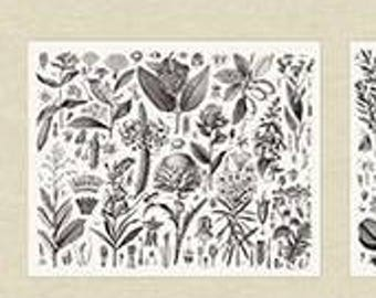 Encyclopedia Terrestria, Botanica, Plant Plate Fabric - Andover Fabric - 8493 Neutral (white/taupe) - Priced by the 24-Inch Panel